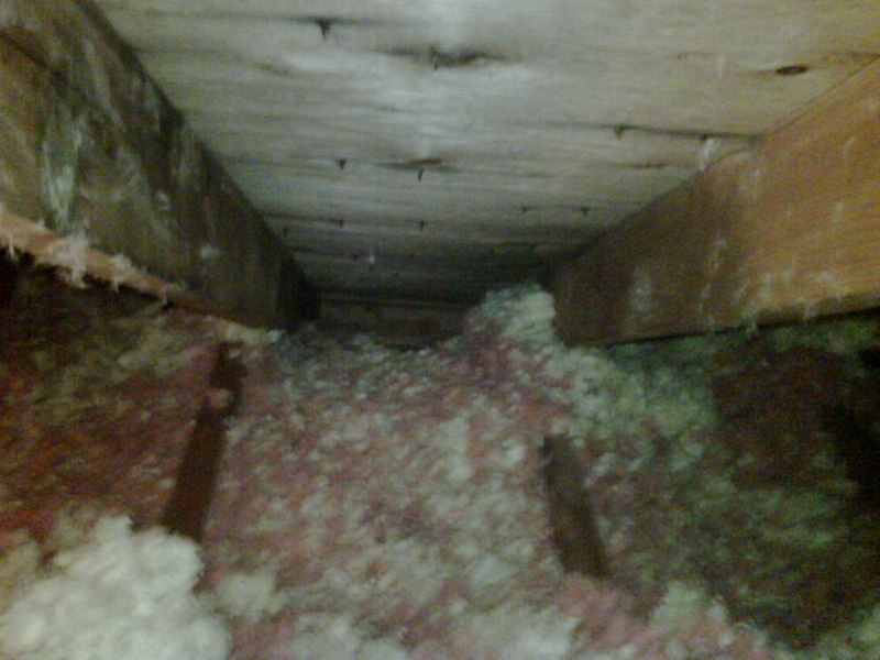Animals Nesting in Attic