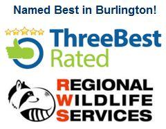 Best Rated Wildlife Removal Burlington - Oakville Halton Ontario