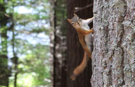 RWS Squirrel Wildlife Prevention