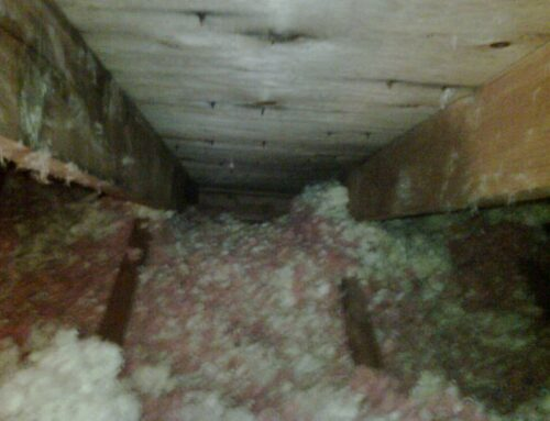 Animals in the Attic? That can be a Huge Problem!
