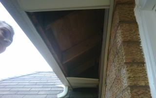 Raccoon Soffit Damage